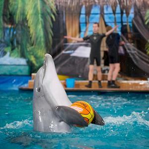 Дельфинарии, океанариумы Рыбинска