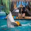 Дельфинарии, океанариумы в Рыбинске